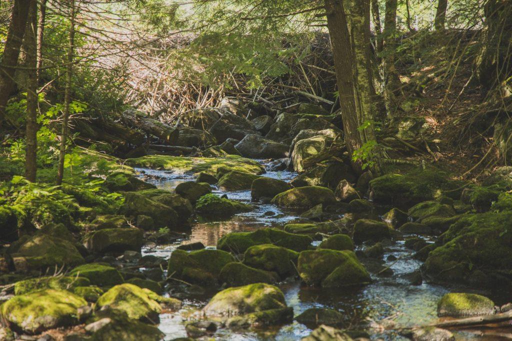 Forêt protégée de Terra Perma dans les Laurentides